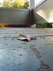 Small nature: leaf on the porch (Astrid Bracke)