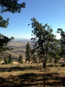 View of the Palouse from Kamiak Bute (Washington State)